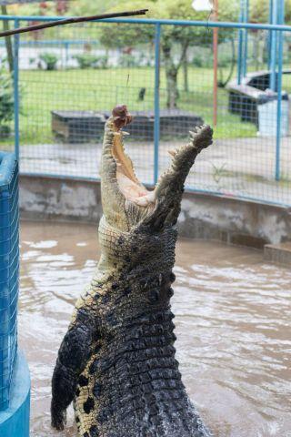 TripLovers_Malaysia_KotaKinabalu_157_TuaranCrocodileFarm