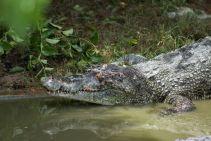 TripLovers_Malaysia_KotaKinabalu_186_TuaranCrocodileFarm