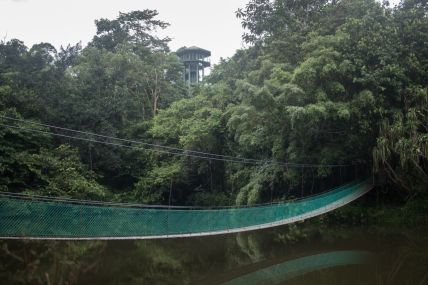 TripLovers_Malaysia_Sandakan_103_SepilokRainforest