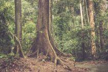 TripLovers_Malaysia_Sandakan_110_SepilokRainforest