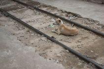 TripLovers_Yangon_239