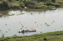 TripLovers_Chitwan_010