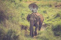 TripLovers_Chitwan_011