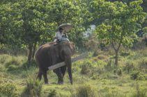 TripLovers_Chitwan_017