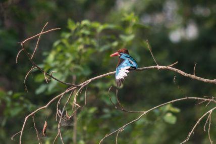 TripLovers_Chitwan_058