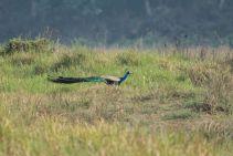 TripLovers_Chitwan_090