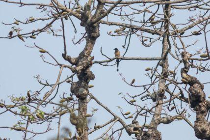 TripLovers_Chitwan_099