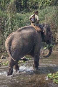 TripLovers_Chitwan_106