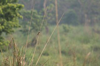 TripLovers_Chitwan_143a