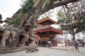TripLovers_Kathmandu_151