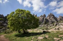 Andalusia2018_102_ElTorcal
