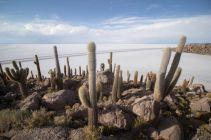 Bolivia_Uyuni_049
