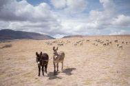Peru_Cusco_049