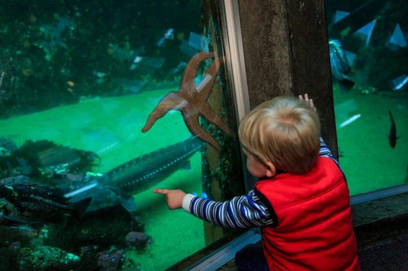 a boy sees a starfish at Seattle Aquarium