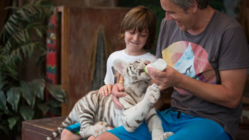 father and son feed for a tiger baby at Jungle Island