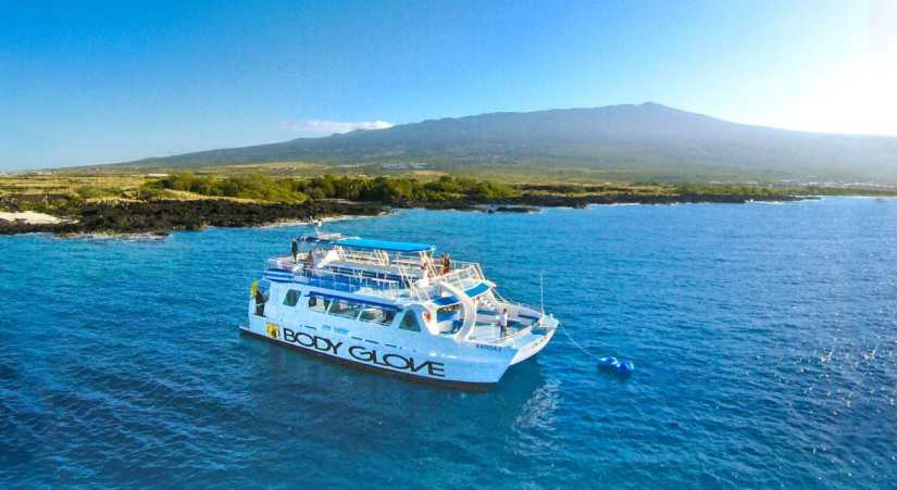 Whale Watching Cruise in Kona