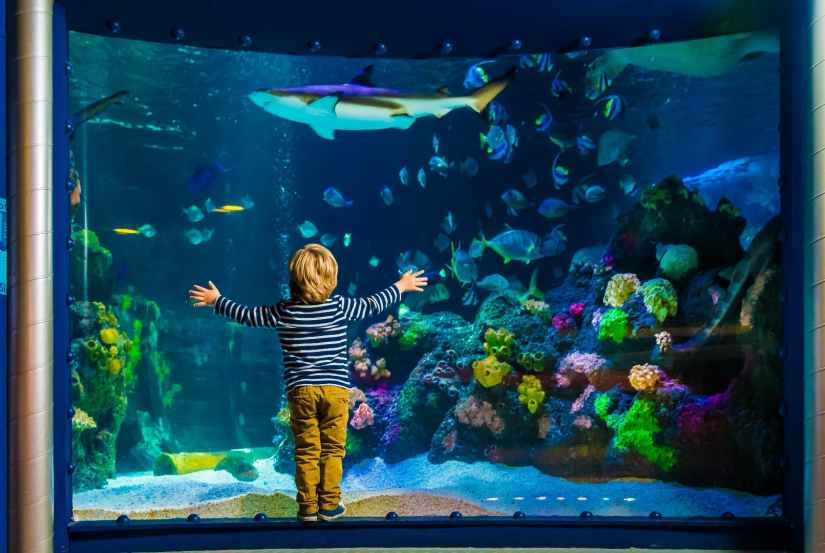 a boy stands in front of a fish tank at SEA LIFE Munich