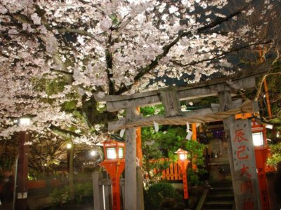 giappone-kyoto-cherry-blossom