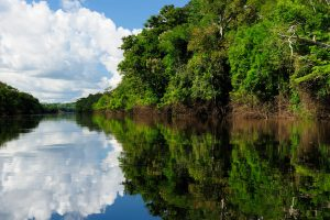 Amazonas landscape. The photo present  Amazon river, Brazil