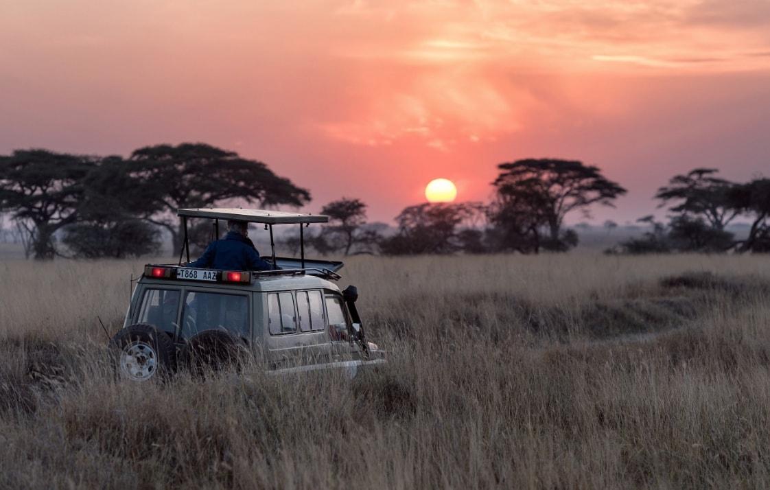 Top 5 Best Cameras For Safari + Lenses & Tripods!