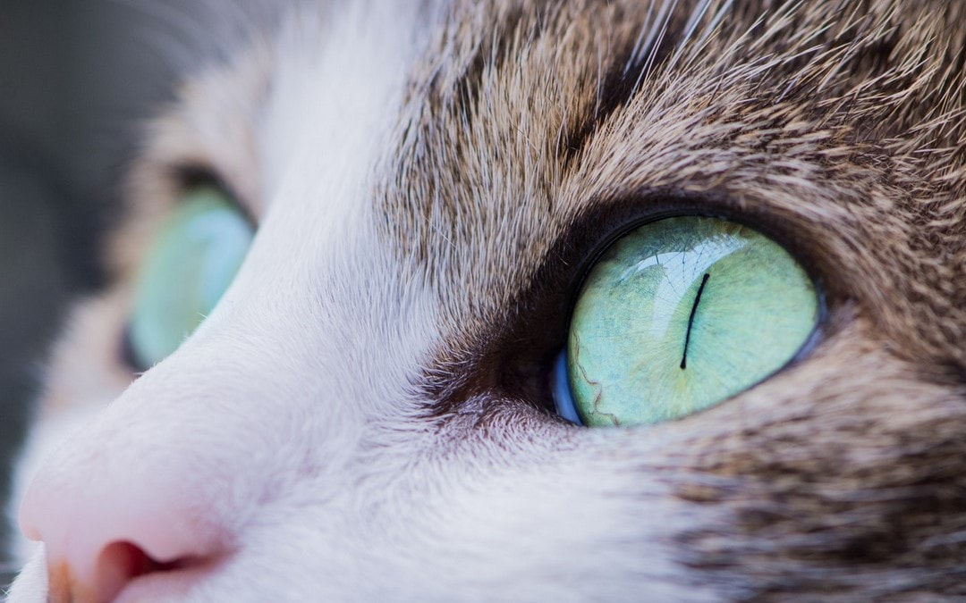 macro-Animal eye pupils