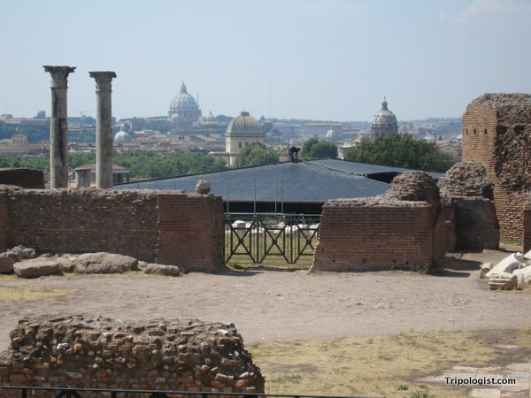 Overlooking Rome from the top of Palatine Hill.