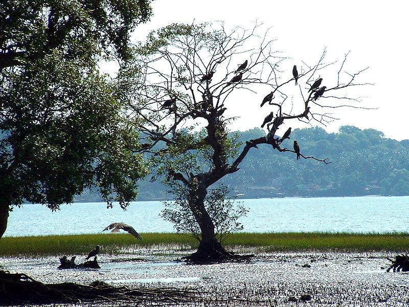 Salim Ali Bird Sanctuary, Goa