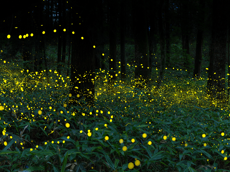 fireflies-sankeien-garden-yokohama-tokyo