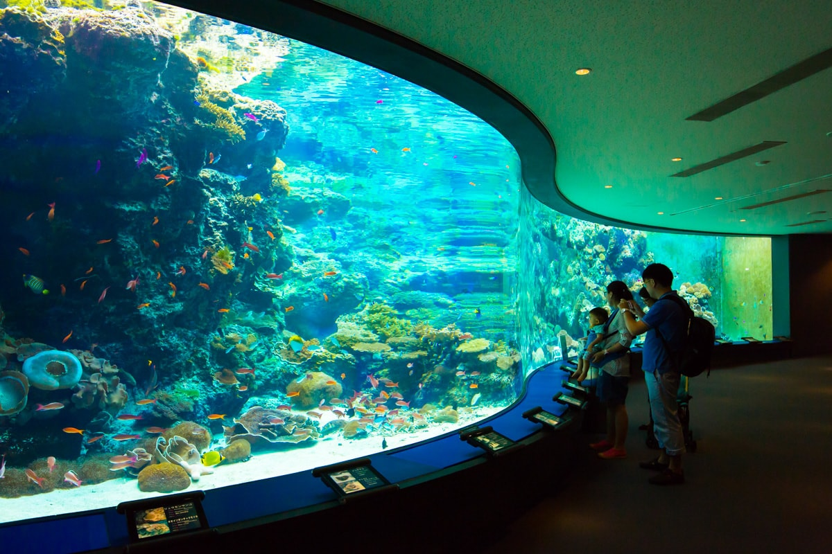 Top 15 Largest Aquariums In The World- 2019