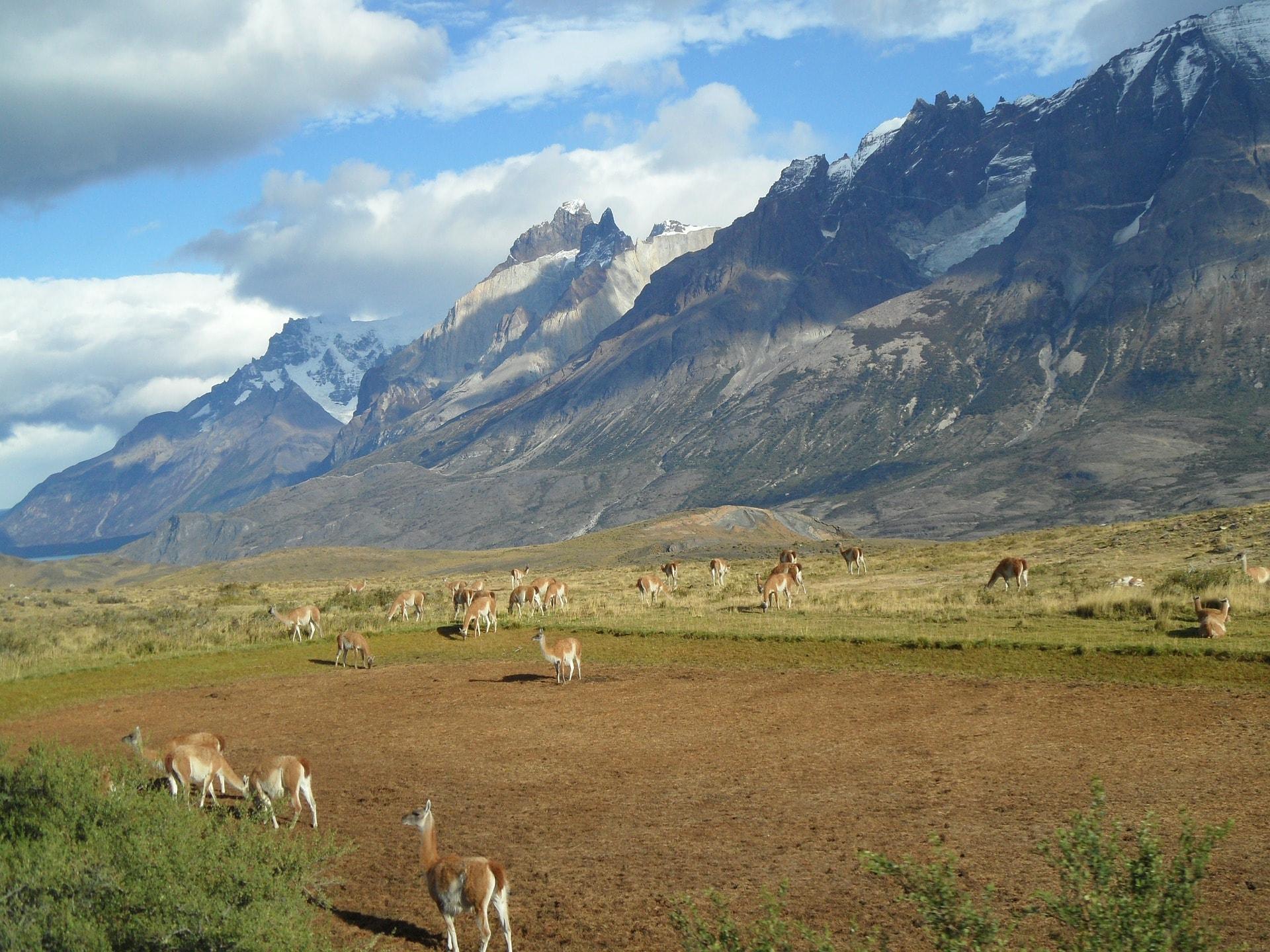 patagonia safari
