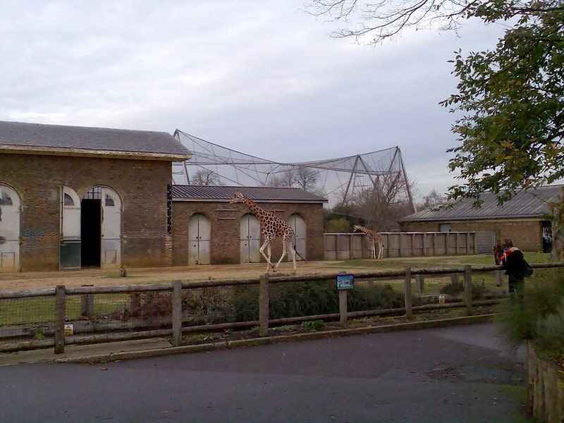 The London Zoo: Harry Potter Locations