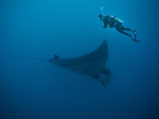 Rainbow reef: Scuba Diving in Fiji