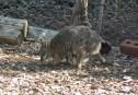Kangaroo Island_the family