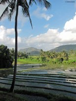 Kastala Rice Terraces