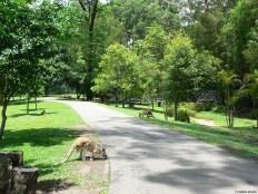 Walking in the middle of kangaroos