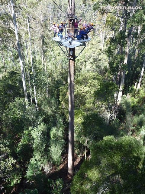 Up the tree - Hollybank Treetops Adventure Tasmania
