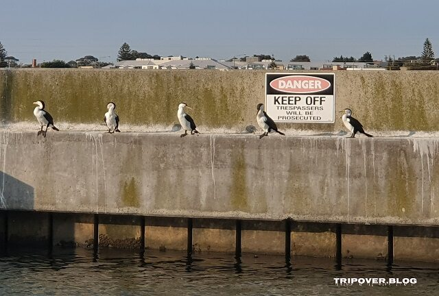Port Phillip Bay birds social distancing