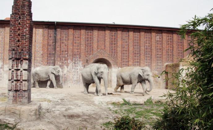 Elefanten (© Zoo Leipzig)