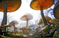 Fungal City