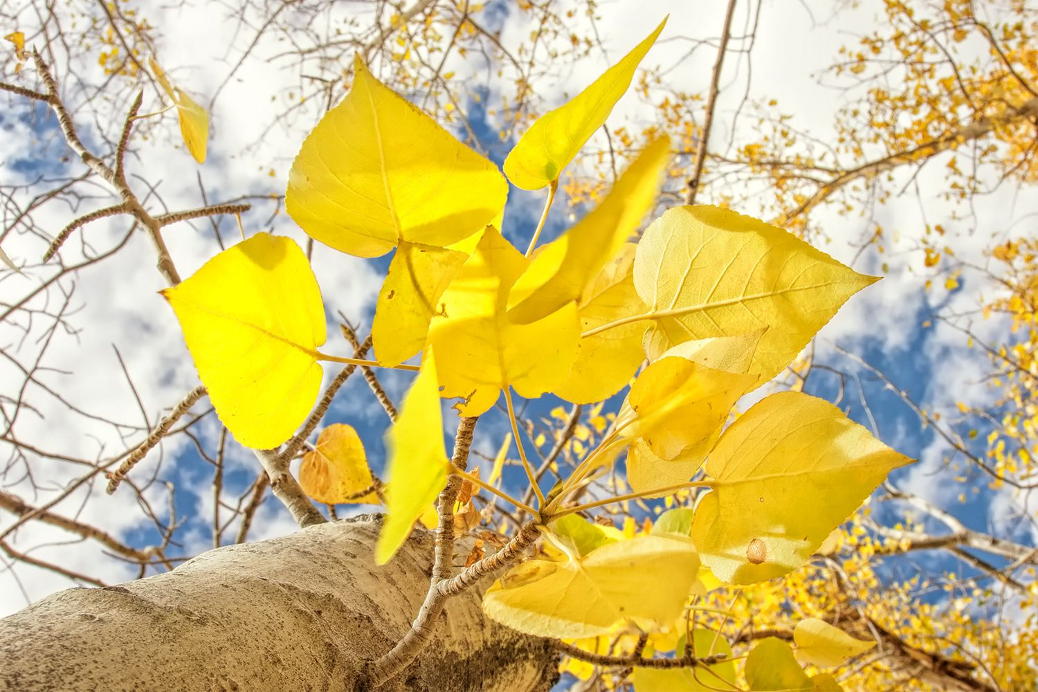 Best Places To Find Fall Color In California