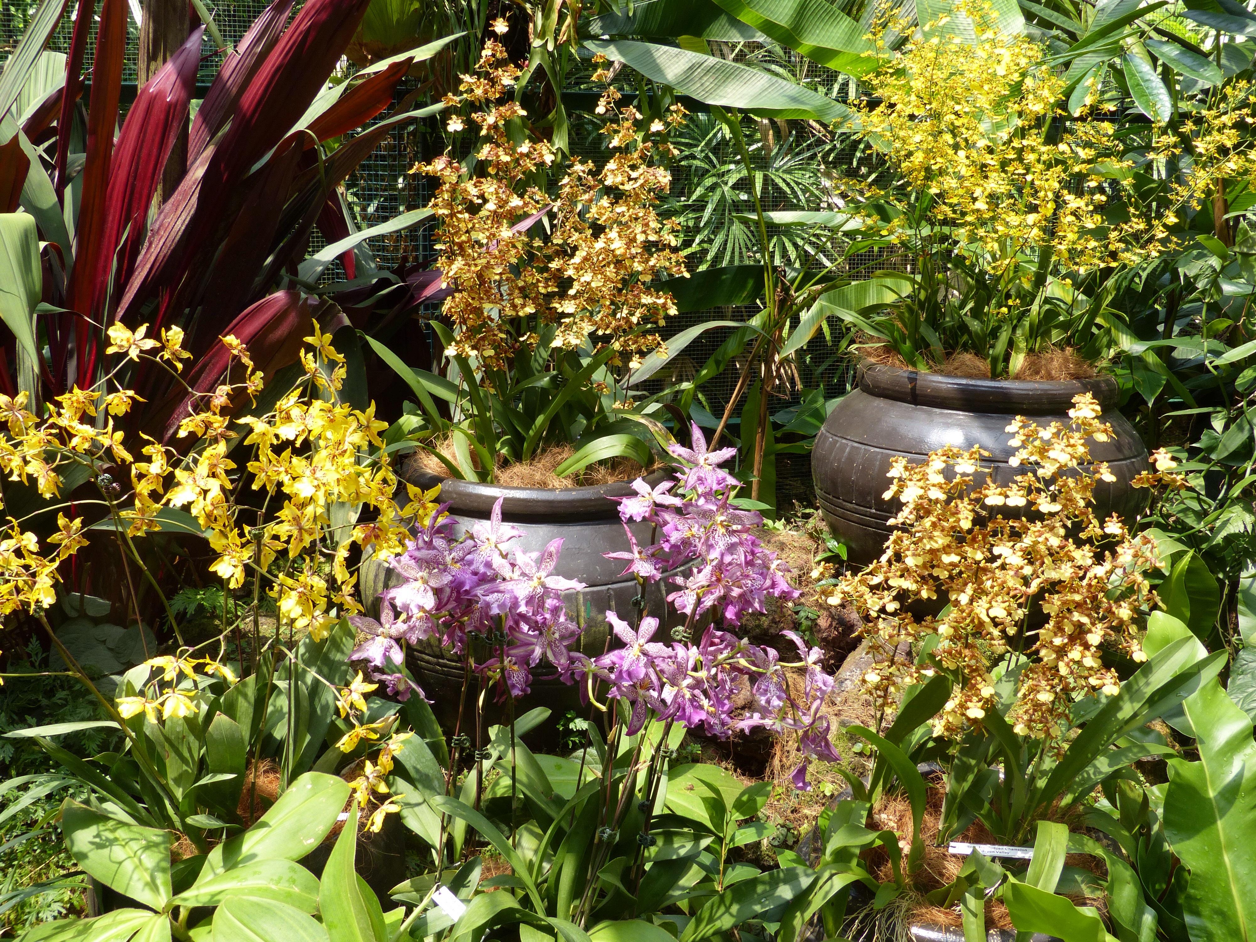 Singapur – Botanischer Garten Und Gardens By The Bay Tripskuppin