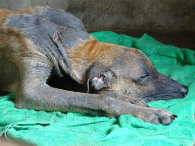Homeless dog looking poor