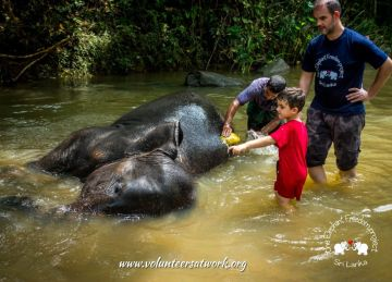 Elephant washing at the Elephant Freedom Project, Sri Lanka