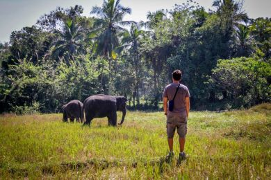 Going for a walk with elephants  at the Elephant Freedom Project, Sri Lanka