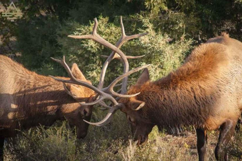 rocky-mountain-national-park-elk-spar-trip