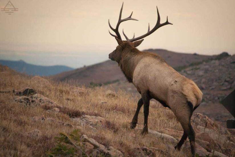 rocky-mountain-national-park-elk-trail-trip