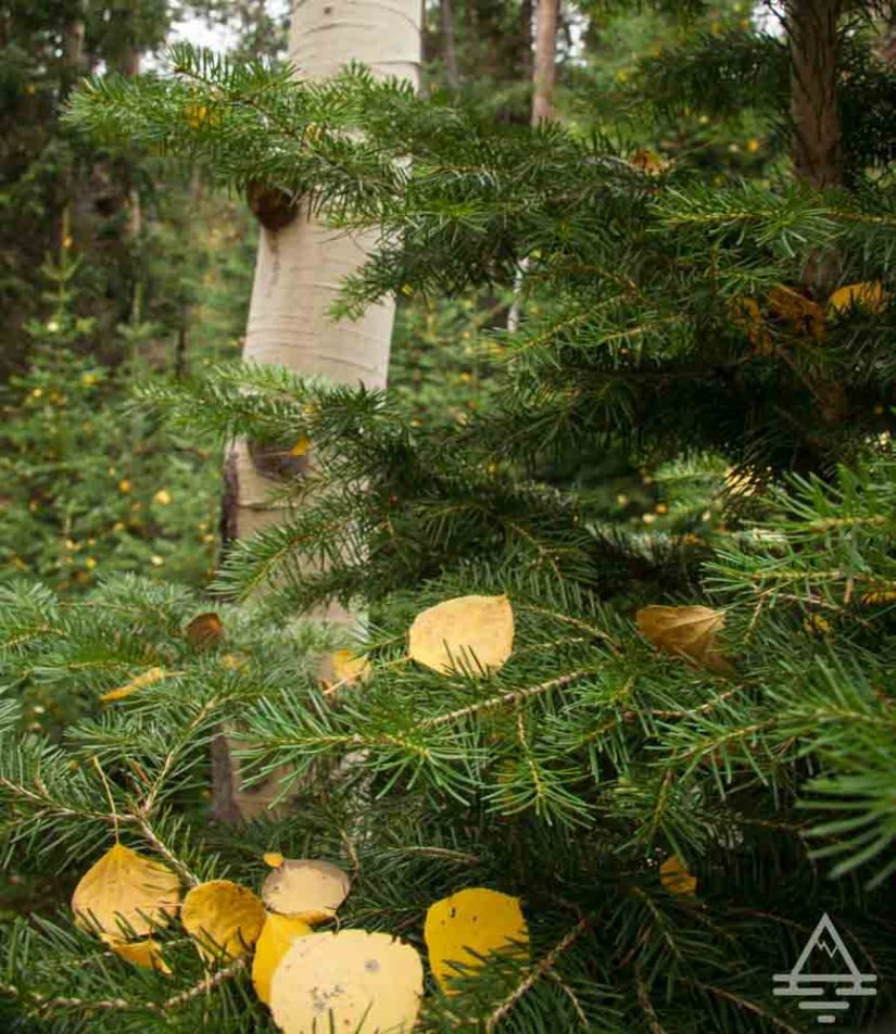 rocky-mountain-national-park-leaf-trip