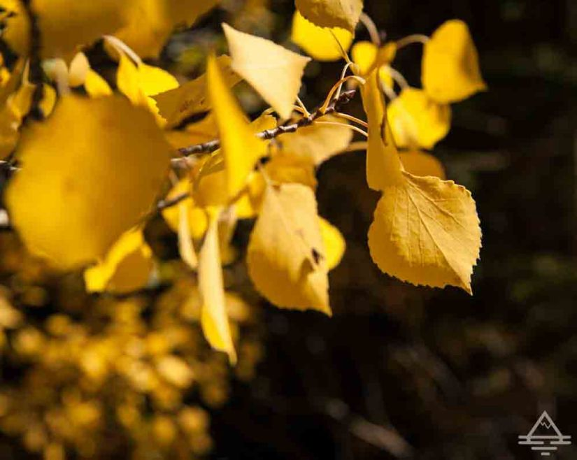 rocky-mountain-national-park-leaves2-trip