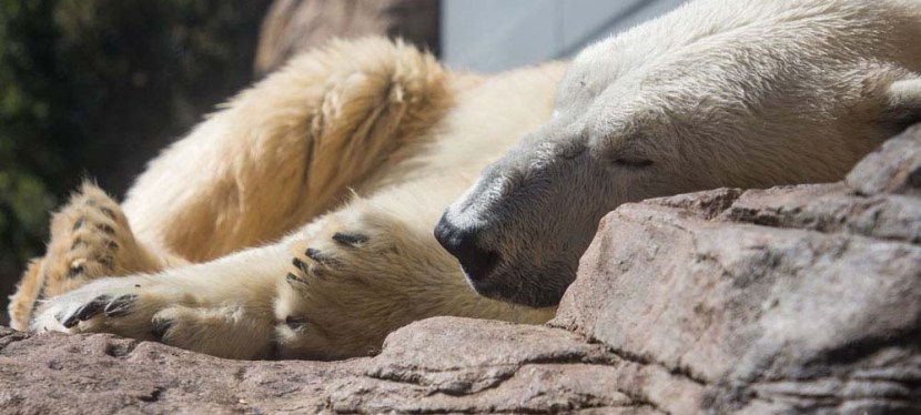 7 Tips for a Sensational Day at the San Diego Zoo
