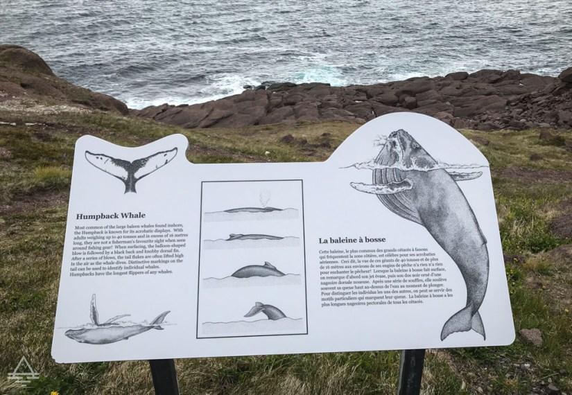 Newfoundland Cape Spear Whale Sign